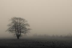 Foto: Brian Obbekjær Jensen | Foggy morning