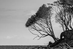 Foto: Lars Agergaard | Mod afgrunden